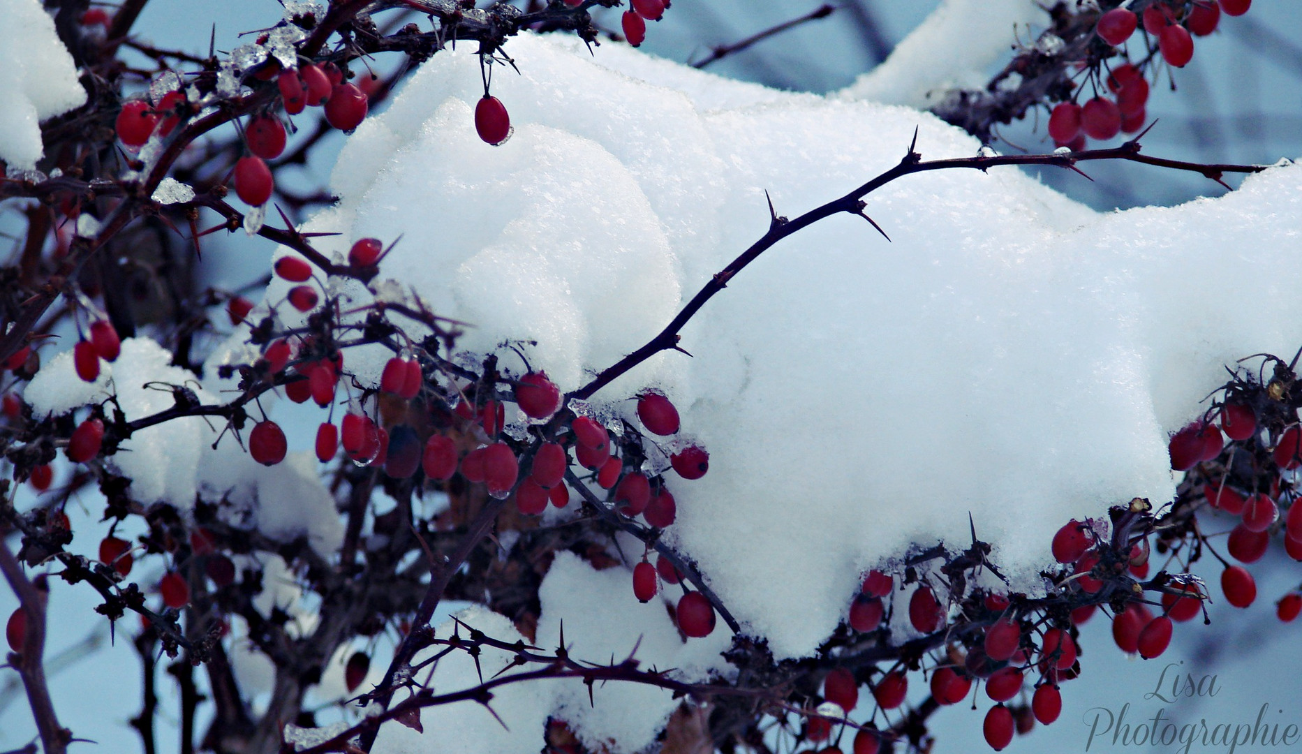 Winter Fotography