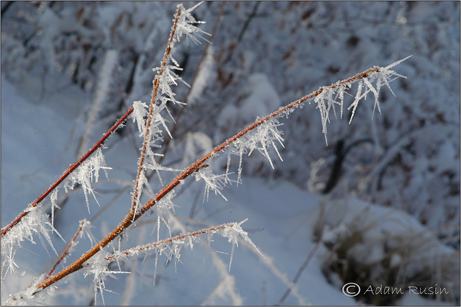 Winter Frost / Polen