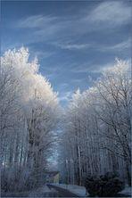 Winter für Hans
