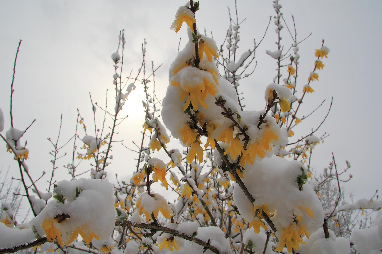 Winter geht.....Frühling kommt