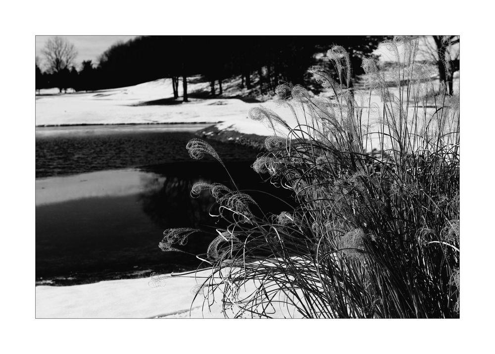 Winter Grasses II