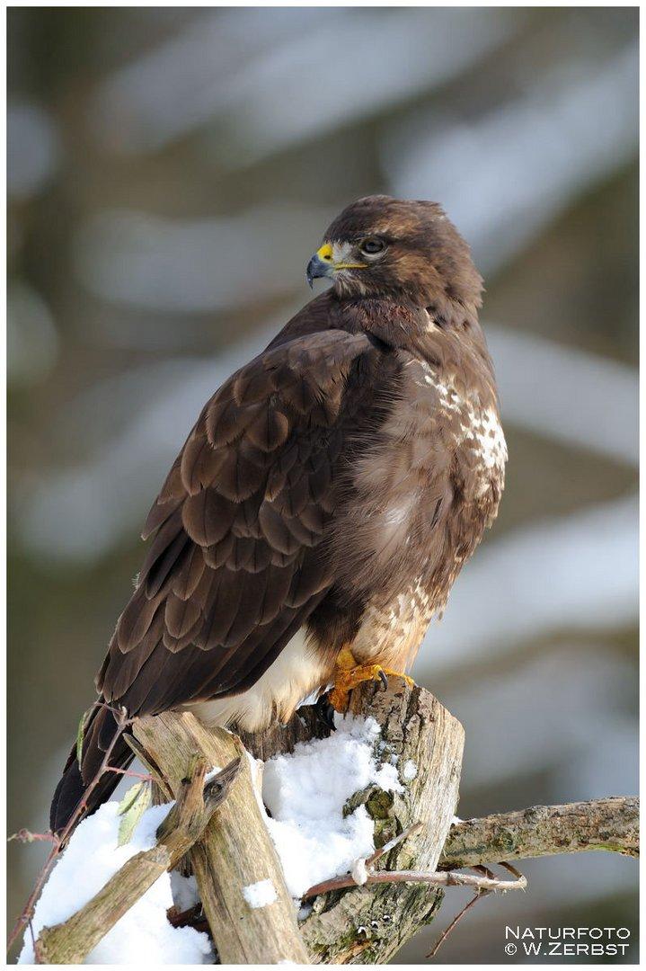 - Winter harte Zeit für die Vögel -