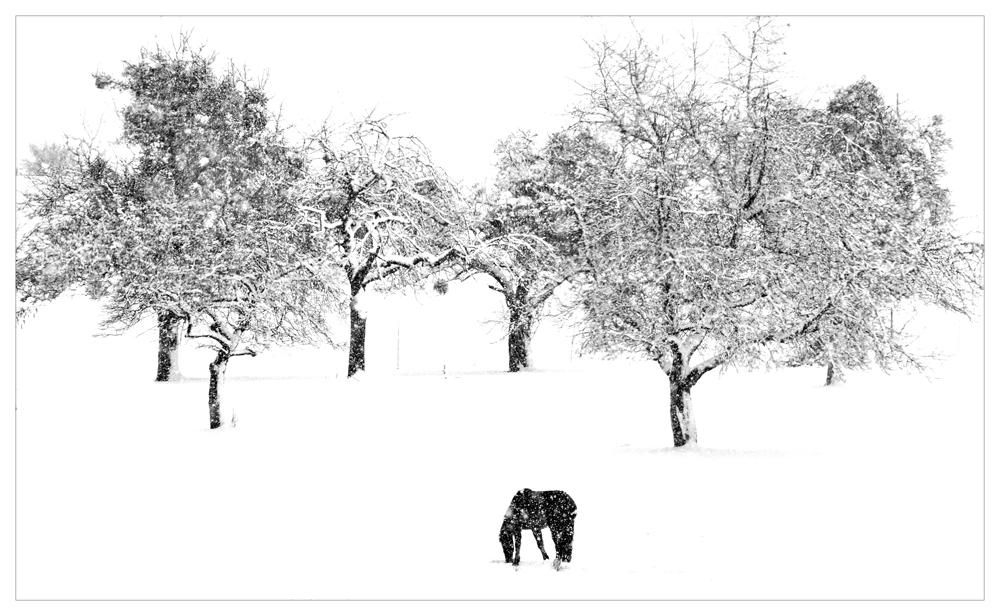 ...winter-horse...
