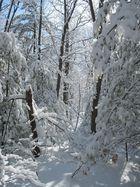 Winter II