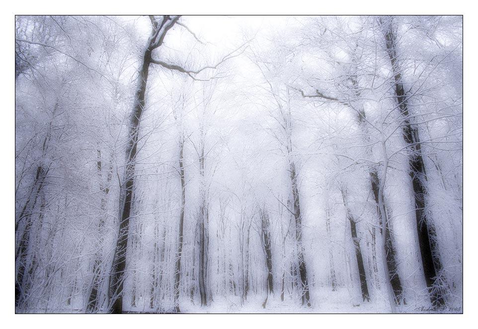 ...::: Winter II :::...