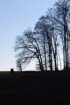 Winter im Beinhardswald