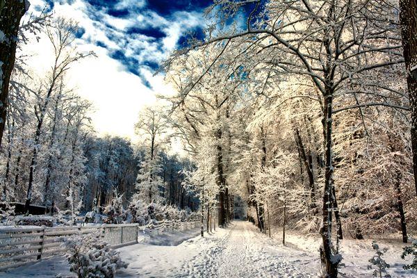 Winter im Bentheimer Wald in Schüttorf