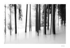 Winter im Bergwald