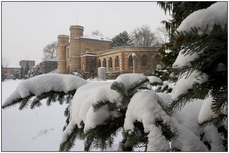 winter im botanischen garten