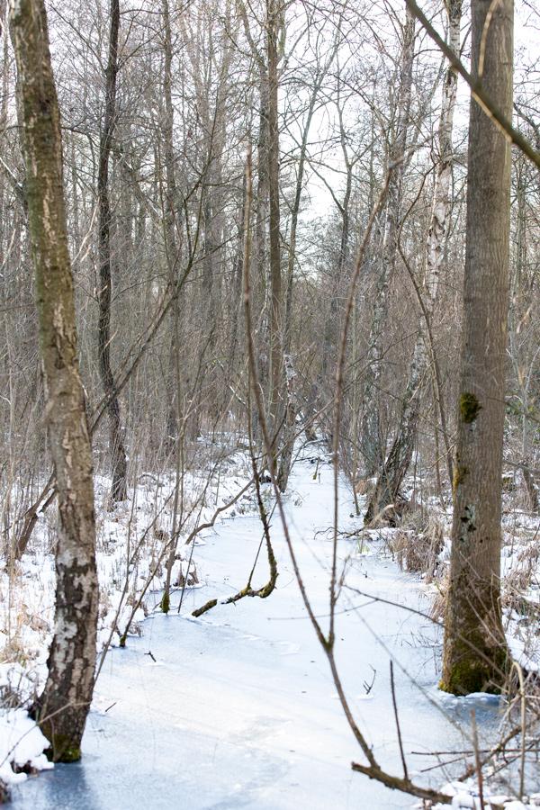 Winter im Bruchwald I