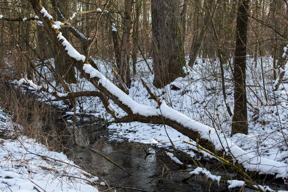 Winter im Bruchwald II