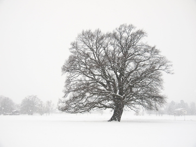 Winter im Chiemgau 3