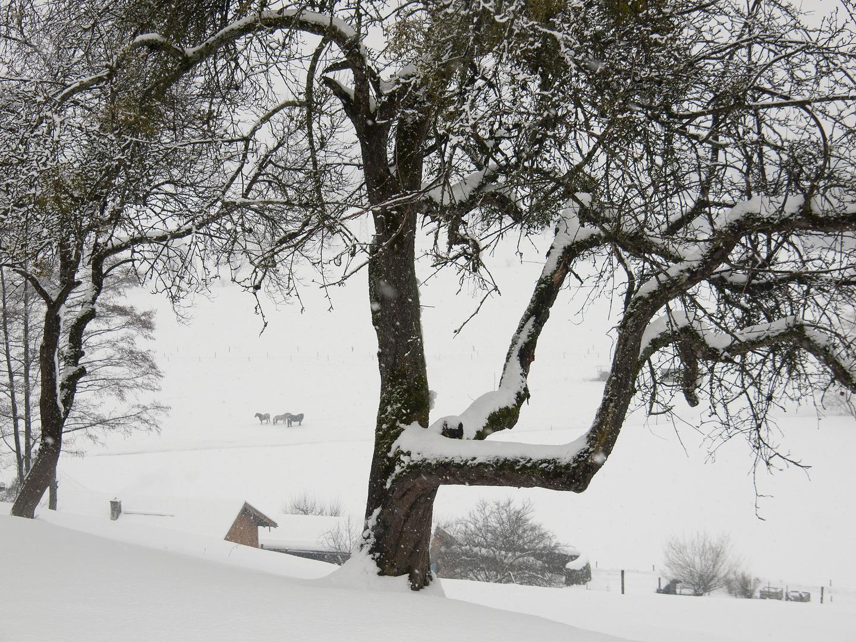 Winter im Chiemgau 6