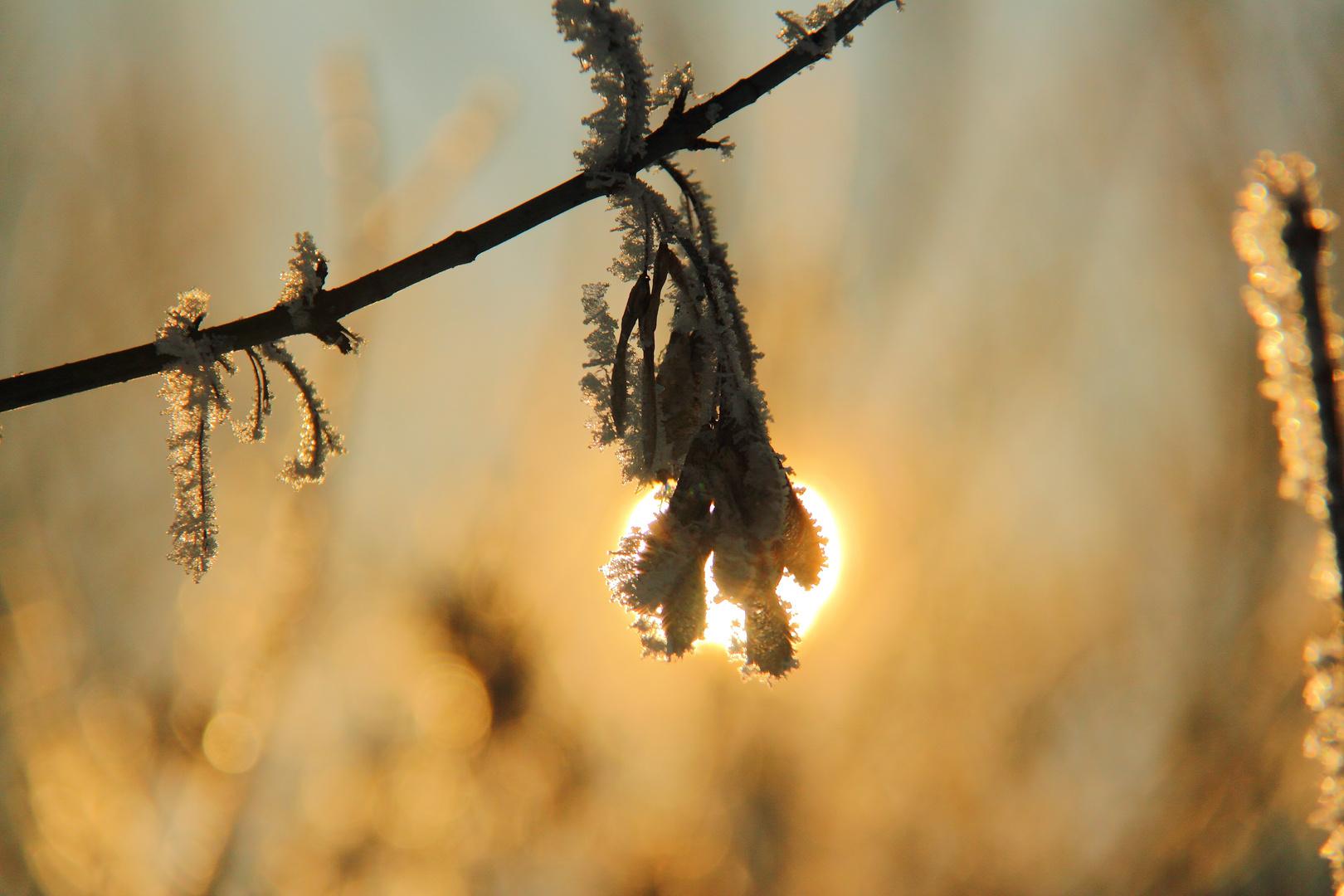 Winter im Detail
