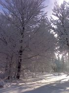 Winter im Ebbegbirge
