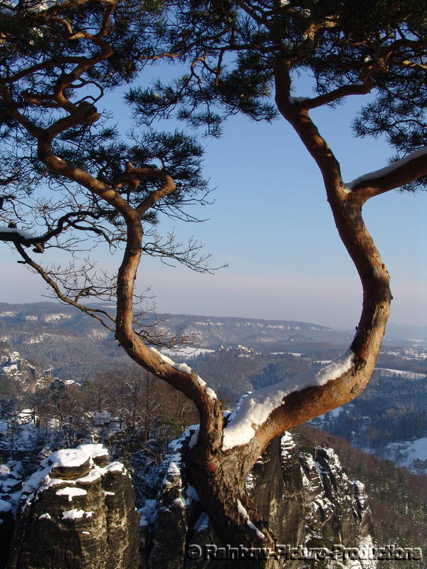 Winter im Elbsandsteingebirge