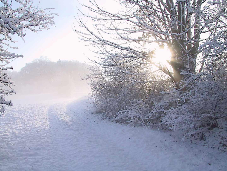 Winter im Gegenlicht
