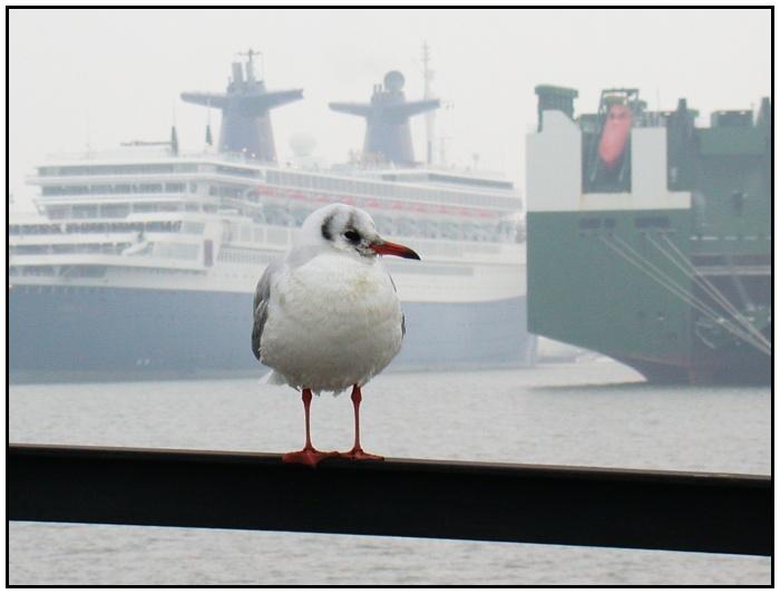 Winter im Hafen 3