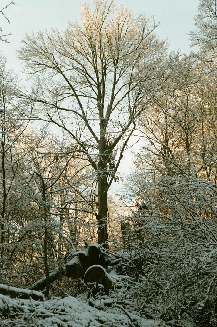 Winter im Harz 2