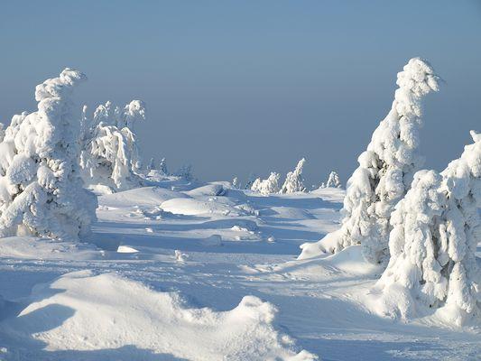 Winter im Harz #2 - Parade der Untoten