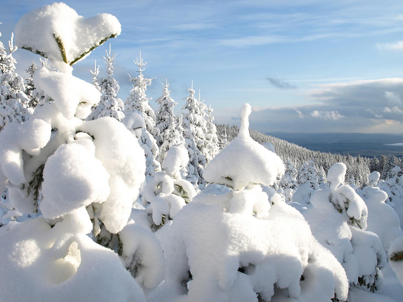 Winter im Harz #3 - Getarnte Wachposten am Grenzweg