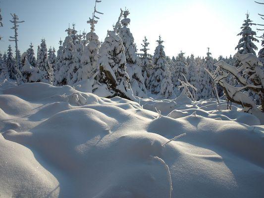 Winter im Harz #5 - Frostbeulen