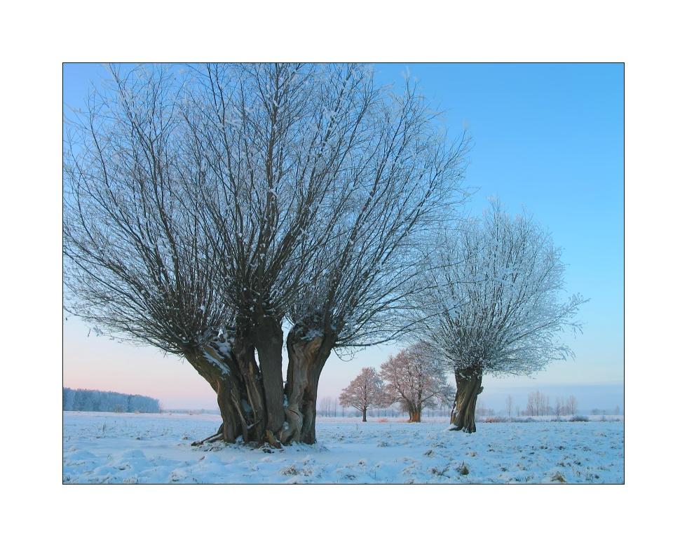 Winter im Havelland
