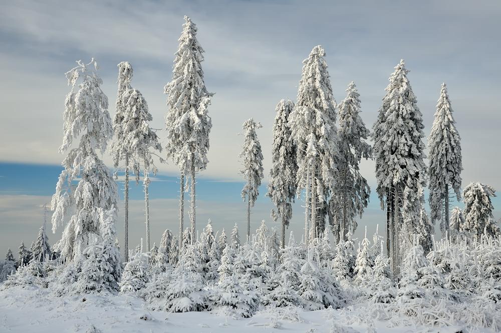 *Winter im Hochwald V*