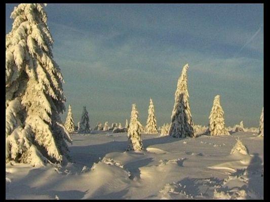 Winter im Hohen Venn 4