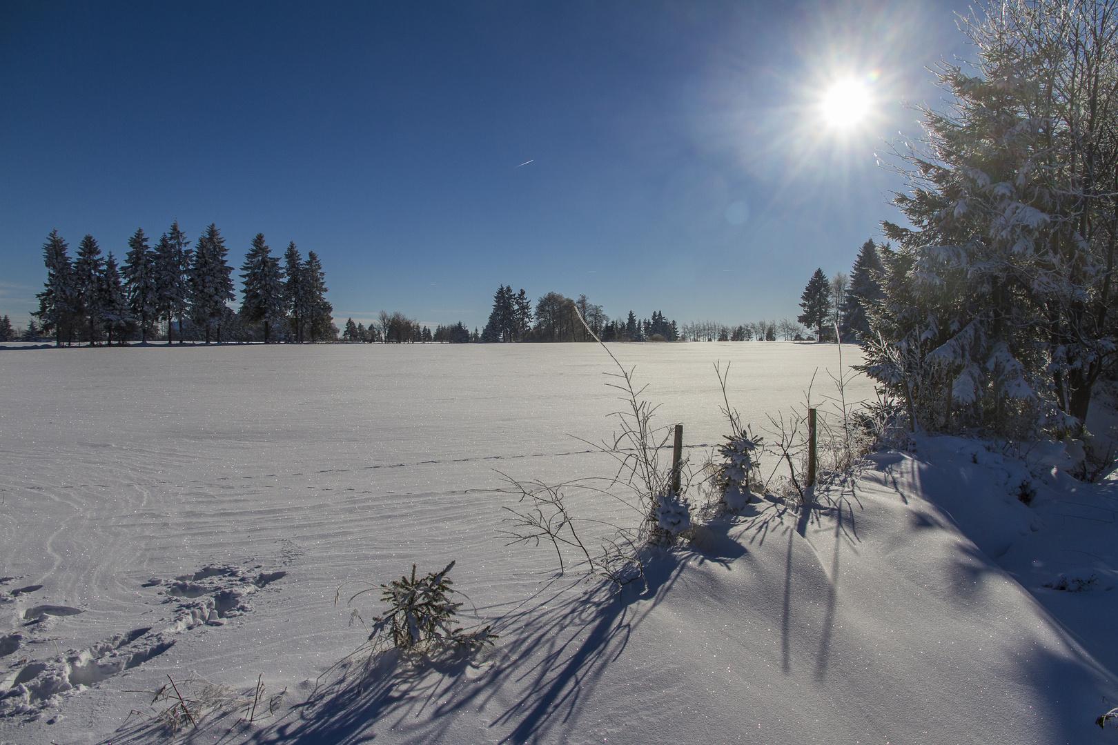 Winter im hohen Venn