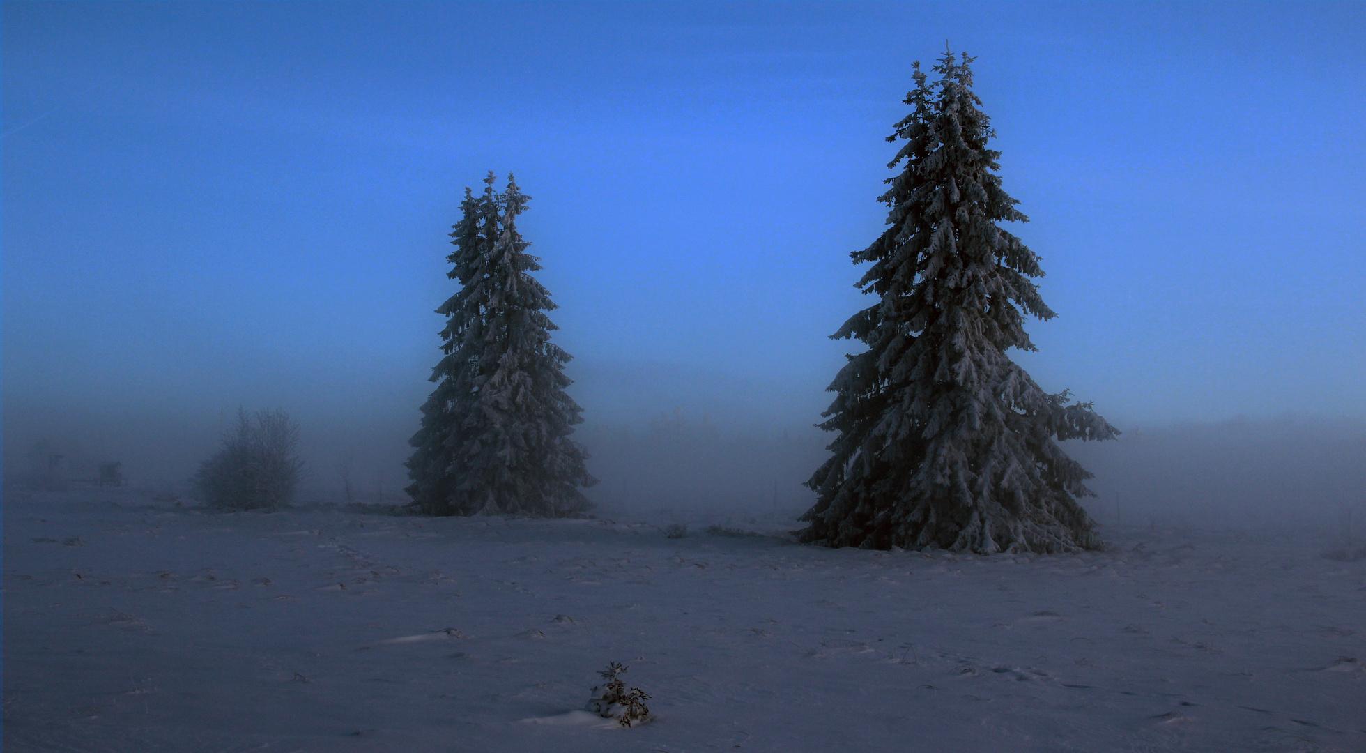 Winter im Hohen Venn Dezember 2012