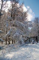 Winter im Hunsrück
