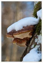 Winter im Iller-Auwald (2)