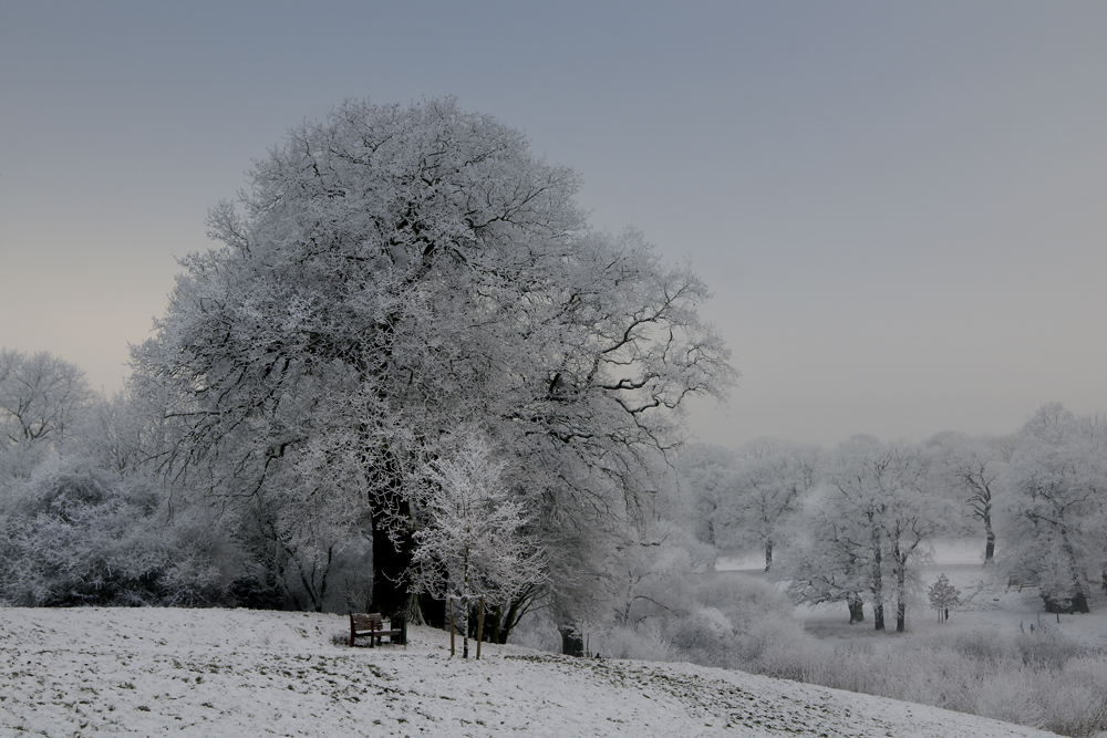 Winter im Jenischpark