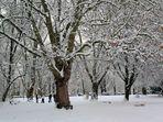 Winter im Kölner Grüngürtel