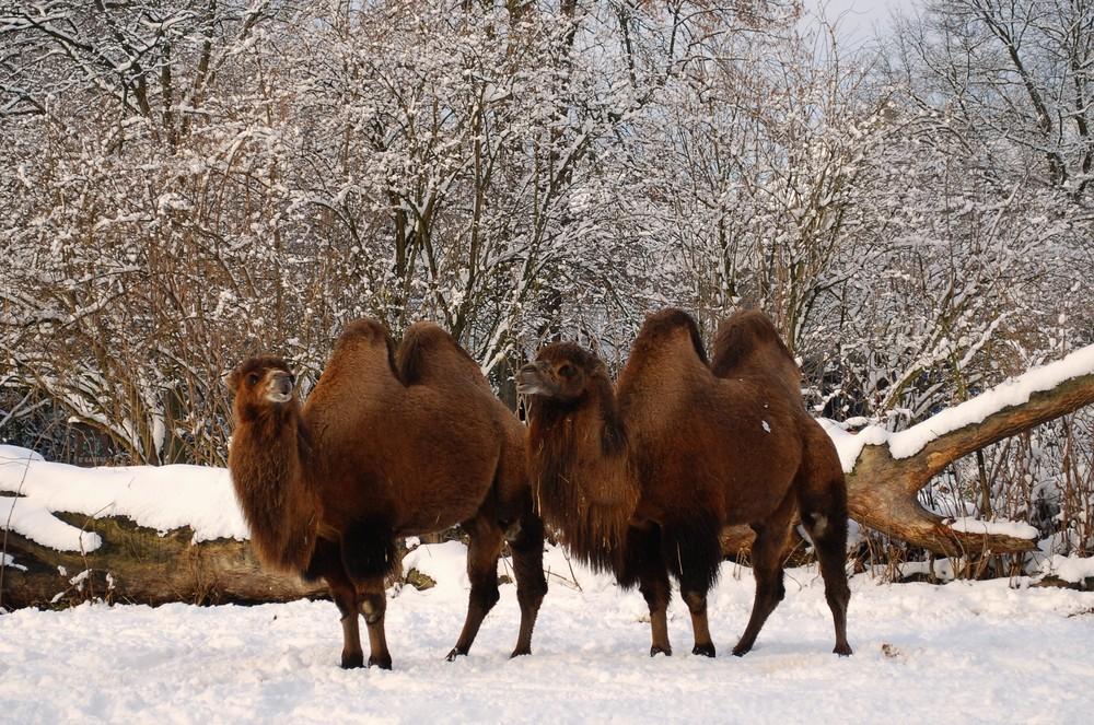 Winter im Kölner Zoo