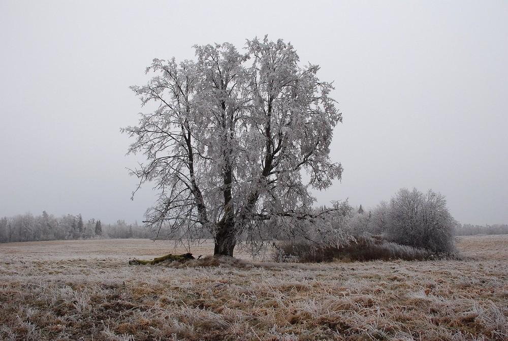Winter im Kurland(Lettland)