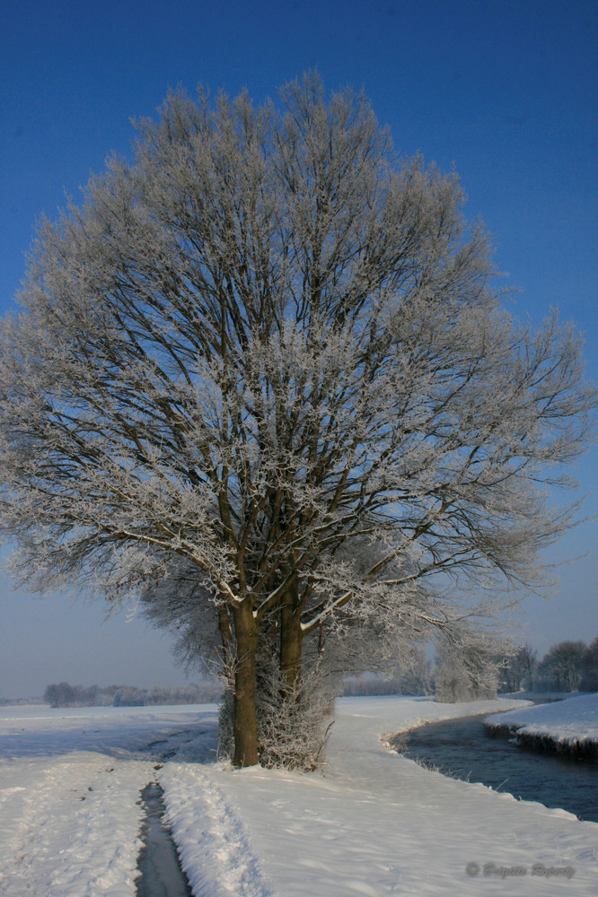 Winter im März