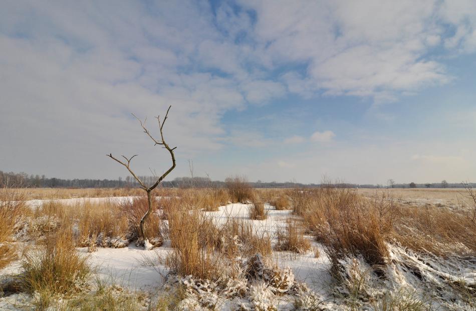 ~Winter im Moor~