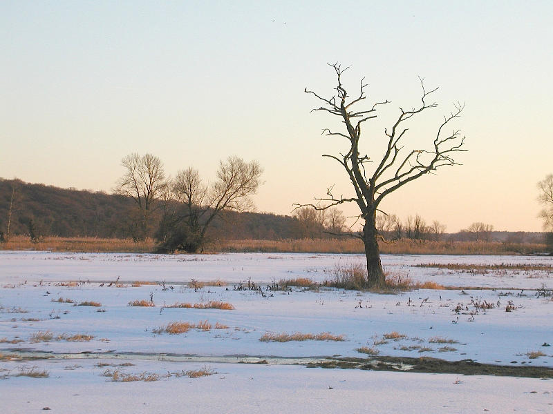 "Winter im Nat.Park ,,Unteres Odertal""2"