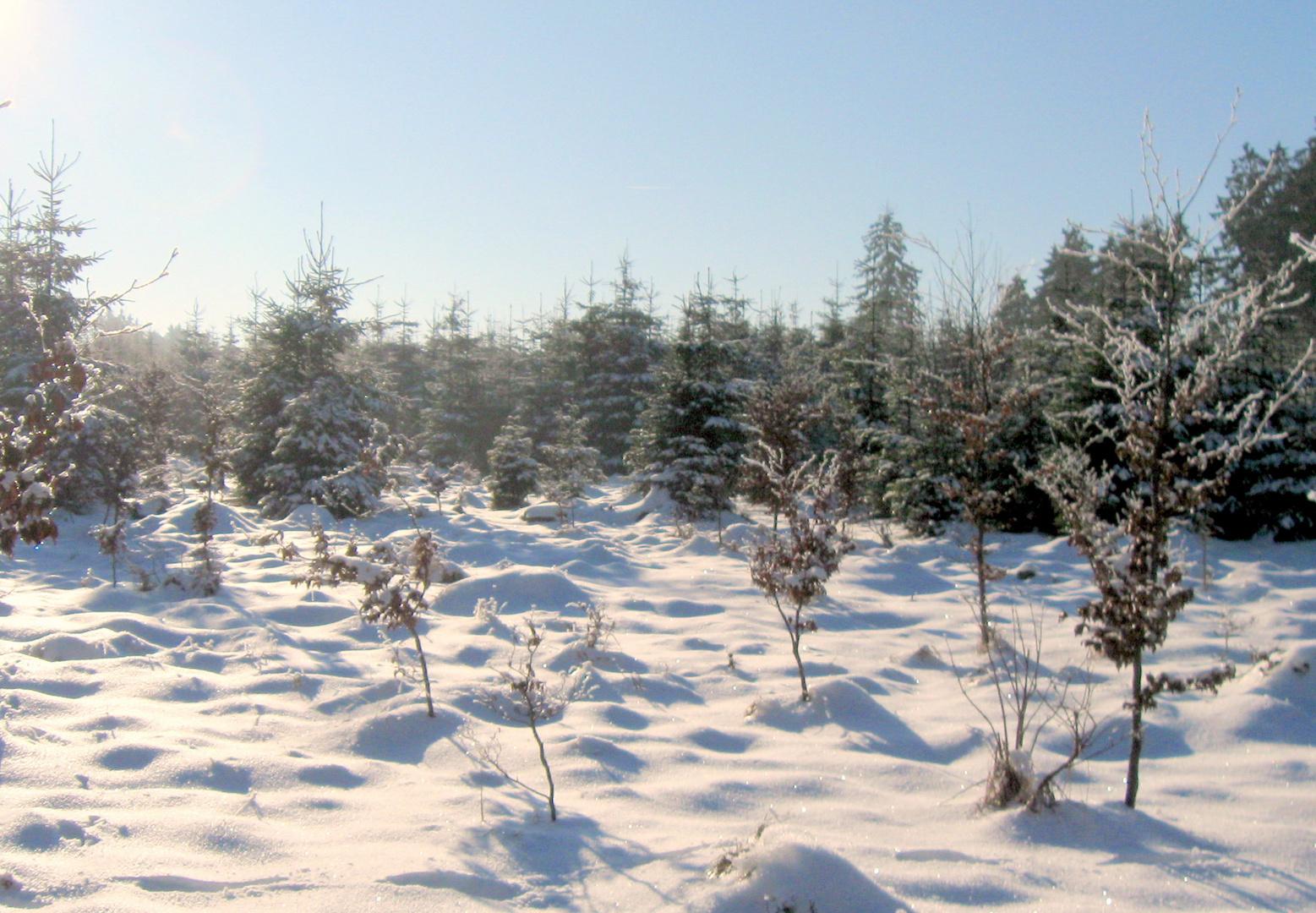 Winter im Naturpark Hoher Vogelsberg 2