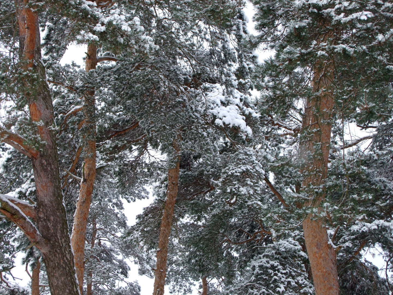 Winter im Naturschutzgebiet Gunnewiesen, Delbrück