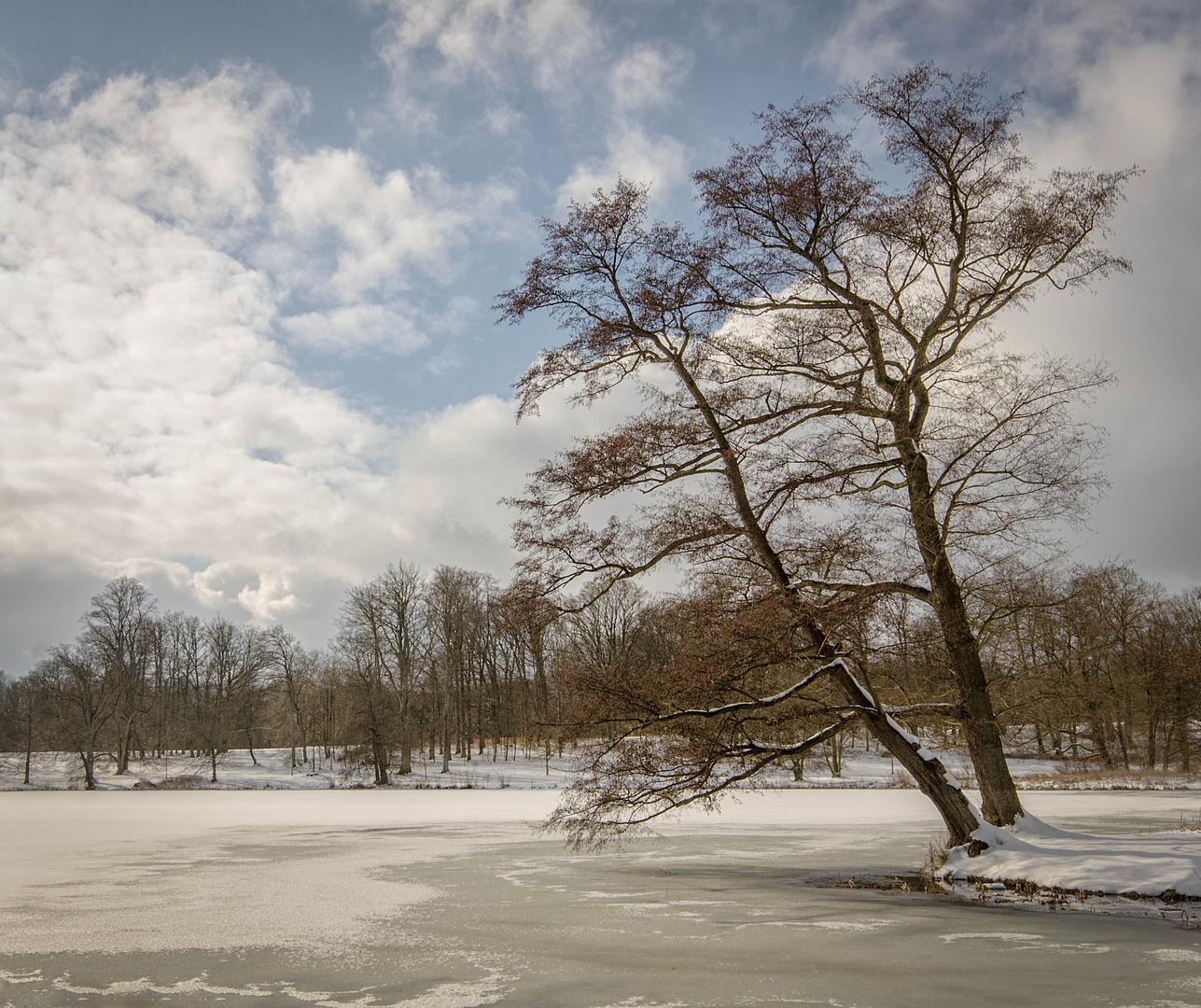 Winter im Putbusser Park