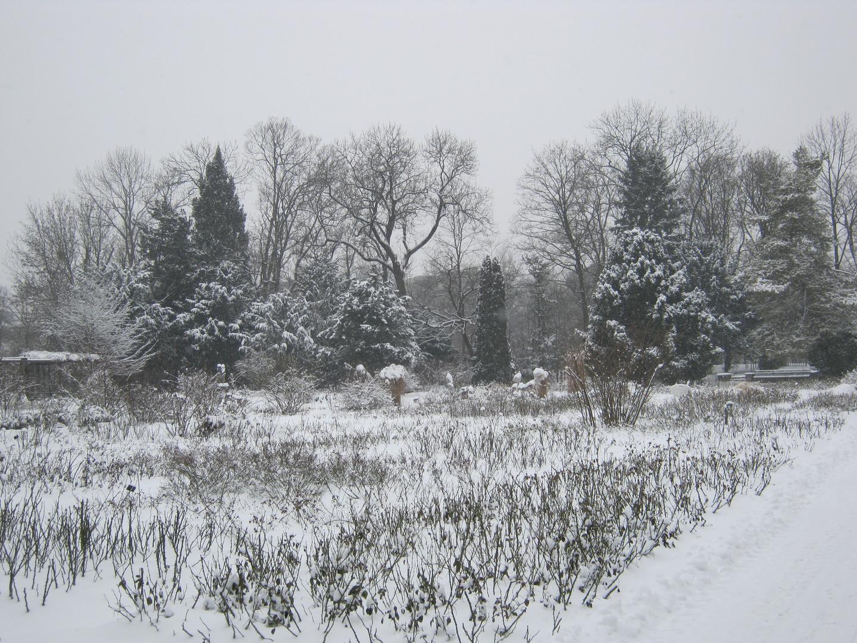 Winter im Rosengarten