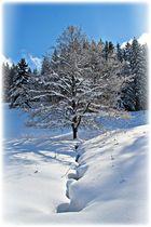 Winter im Schwarzwald V