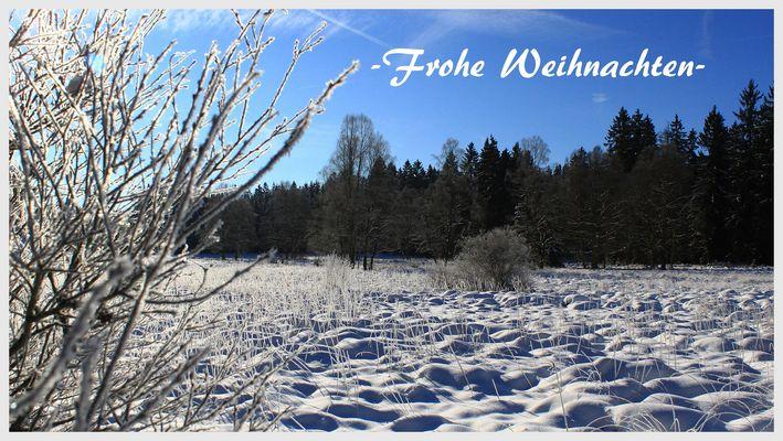 -Winter im Solling-