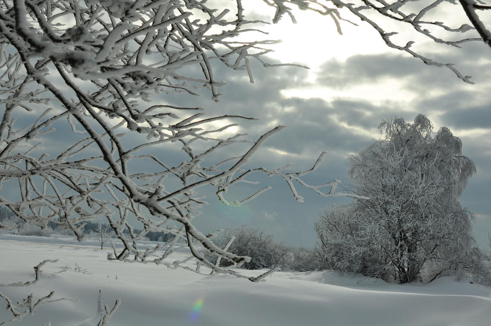 winter im venn 1
