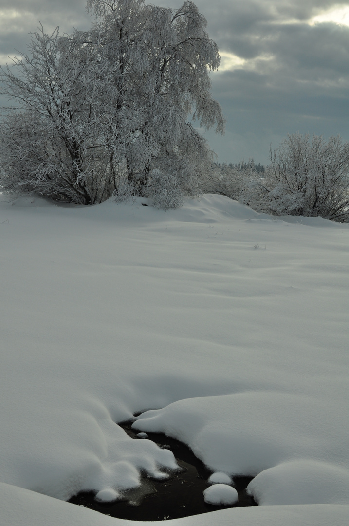 winter im venn 3