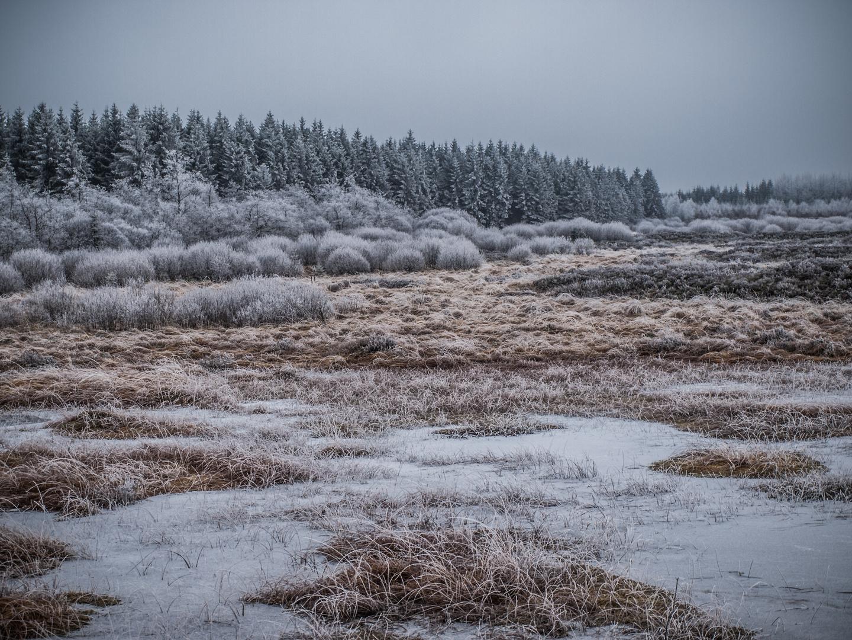 Winter im Venn