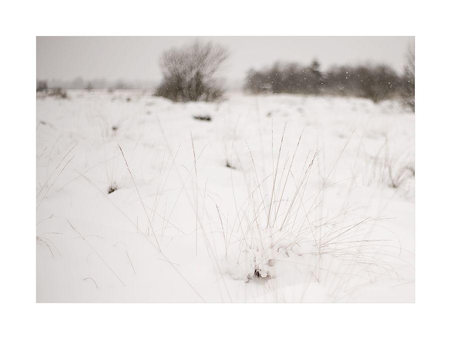 winter im venn   (I)...